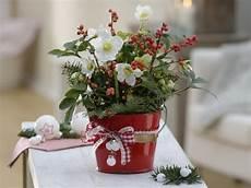 Christrose Im Zimmer - ideen weihnachtsgeschenke kreativ einpacken mein