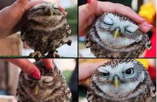 Foto Lucu Di Jual Burung Hantu Gambar Viral Hd