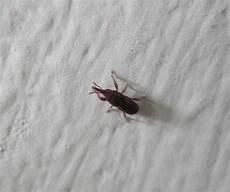 Was Ist Das F 252 R Ein Tier Insekt K 228 Fer Tiere Insekten