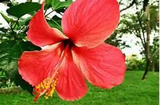 flor emblematica del estado trujillo venezuela s 237 mbolos naturales del estado vargas
