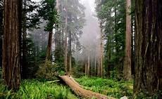 Aneka Info Gambar Hutan Pemandangan Hutan