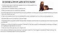 western australian ferret ferreting society