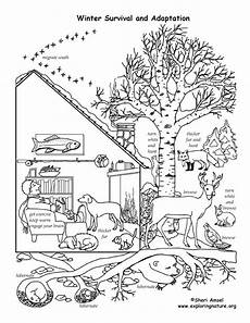 migrating animals coloring pages 17086 winter animal mural survival adaptations