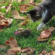 Ratten Im Garten Kompost Vertreiben Tipps Zur Bek 228 Mpfung