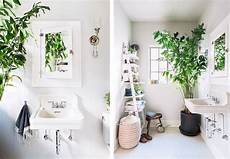 plante verte pour salle de bain la fabrique 224 d 233 co des plantes dans la salle de bain