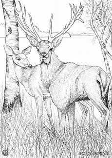wood animals coloring pages 17194 59 best ideas about patrones lanigrafia on pictures coloring books and