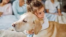 welcher hund passt zu mir test gro 223 er test welcher hund passt zu mir bildplus