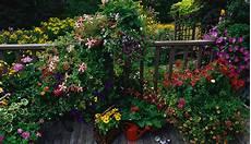 piante da terrazzo perenni piante da terrazzo utili e donne sul web