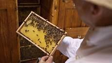 Im Vorarlberg Sterben Die Bienen Fm1today