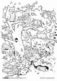 Ausmalbilder Igel Wald 98 Genial Ausmalbilder Tiere Im Wald Fotografieren