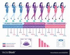 sauna schwangerschaft 1 trimester pregnancy timeline royalty free vector image vectorstock