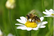 Malvorlage Biene Und Blume Bienensterben Ein Thema Das Bewegt Kreitl E U