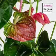 fiori di tutto il mondo fiori a domicilio regali a domicilio in tutto il mondo