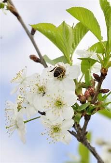 corso fiori di bach on line corso fiori di bach con attestato di partecipazione
