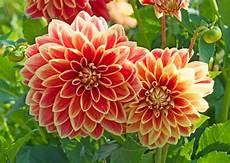 Blumen Sonniger Standort - blumen f 252 r besonders sonnige beete