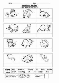 animal worksheets doc 13833 name the nocturnal animals teaching resources