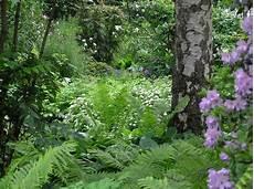 56 Besten Schattengarten Bilder Auf Farne