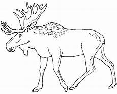 moose coloring page 3 free printable coloring pages
