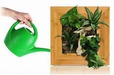 Echter Zimmerpflanze Kaufen - pflanzenbilder lebendige kunstwerke f 252 r die wohnung und