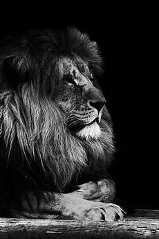 noir et blanc noir et blanc banque d images et photos libres de