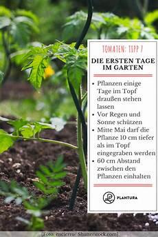 10 tipps zur 10 tipps zur perfekten tomate aus dem eigenen garten