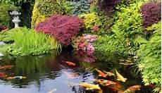 plante bassin exterieur bassin de jardin quels poissons choisir c 244 t 233 maison