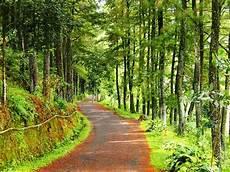 Jalan Hutan Pinus Di Wisata Gunung Salak Endah Bogor A