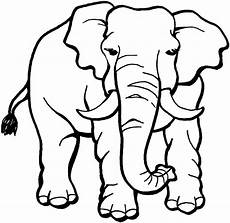 indian elephant drawing clipart panda free clipart images