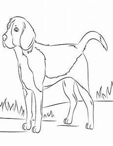Ausmalbilder Hunde Beagle Ausmalbild Beagle Zum Ausdrucken