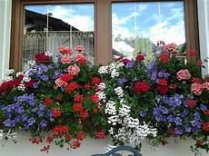 piante da davanzale fiori sui davanzali foto di albergo brunella san