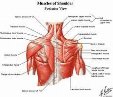 Posterior Shoulder Release Active Edge Chiropractic