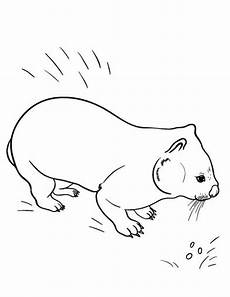Malvorlagen Zum Ausdrucken Wombat 321 Best Coloring Pages At Coloringcafe Images On