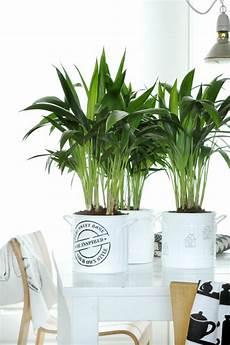 Pflanzen Wenig Licht - welche zimmerpflanzen brauchen wenig licht