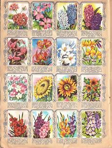 fiori di tutto il mondo fiori di tutto il mondo ed lo 1956