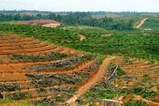 Greenpeace Sebut Kebun Sawit Andil Besar Deforestasi Apa