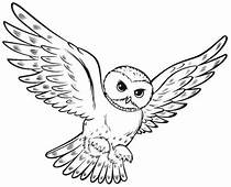 Owl Hunting For Food Coloring Page  Download & Print