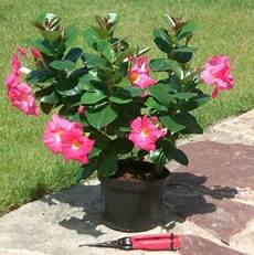 plante terrasse plein soleil plante fleurie exterieur l atelier des fleurs