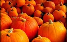 Orange Wallpaper Pumpkin orange pumpkins is here