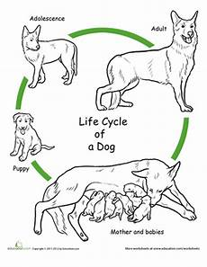 animal cycle worksheets 13938 color the cycle cycles human cycle cycle for