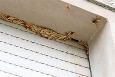 wespennest im rolladenkasten entfernen wespennest im rolladenkasten entfernen tt66