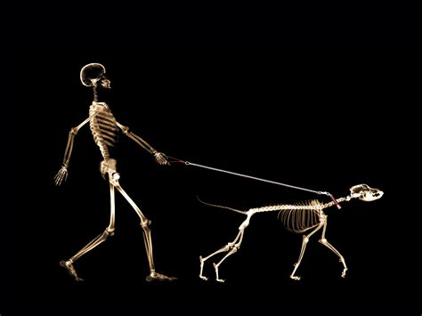Funny Xray Images