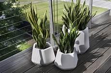 vasi per piante da esterno prezzi vaso da interno e giardino ops s nicoli