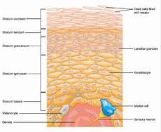 Anatomi Kulit Manusia Dan Beragam Fungsi Pentingnya