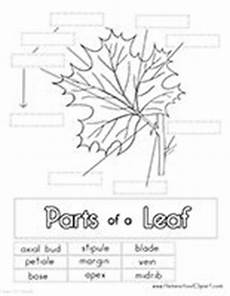 printable worksheets parts 18216 free parts of a leaf printables worksheets coloring pages clipart and more to save clipart