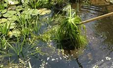 Algen Im Teich Entfernen Ohne Chemie