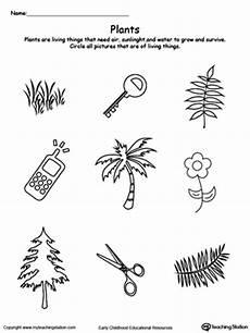 plants and animals worksheets for kindergarten 13507 kindergarten plants and animals printable worksheets myteachingstation