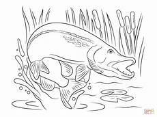 northern pike jump out of water coloring page free