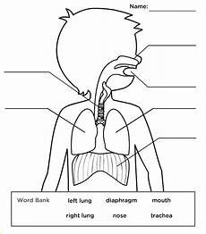 respiratory system systems