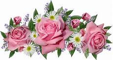 Paling Keren 21 Gambar Bunga Mawar Pink Png Richa Gambar