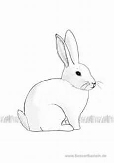 Malvorlage Hasenbaby Kostenlose Und Handgemalte Ausmalbilder Zum Drucken Tiere